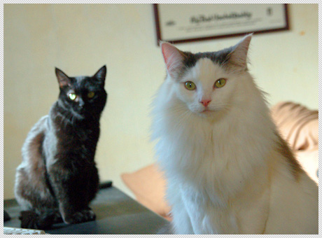 071210_cats01.jpg