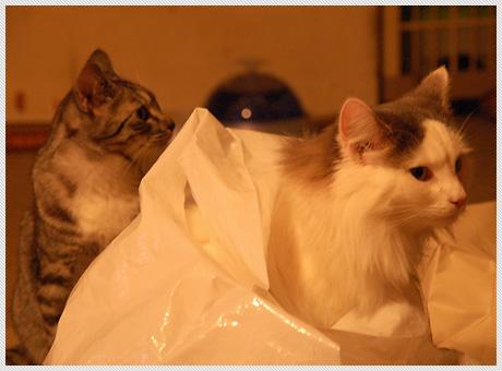 071210_cats02.jpg