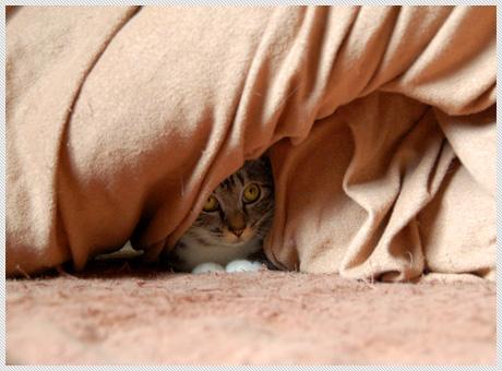 071210_cats03.jpg